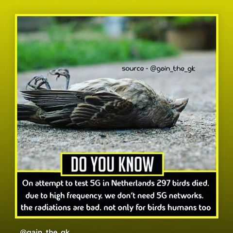 vivasayee - source - @ goin _ the _ gk DO YOU KNOW On attempt to test 5G in Netherlands 297 birds died , due to high frequency . We don ' t need 5G networks . the radiations are bad . not only for birds humans too علم مانده - ShareChat