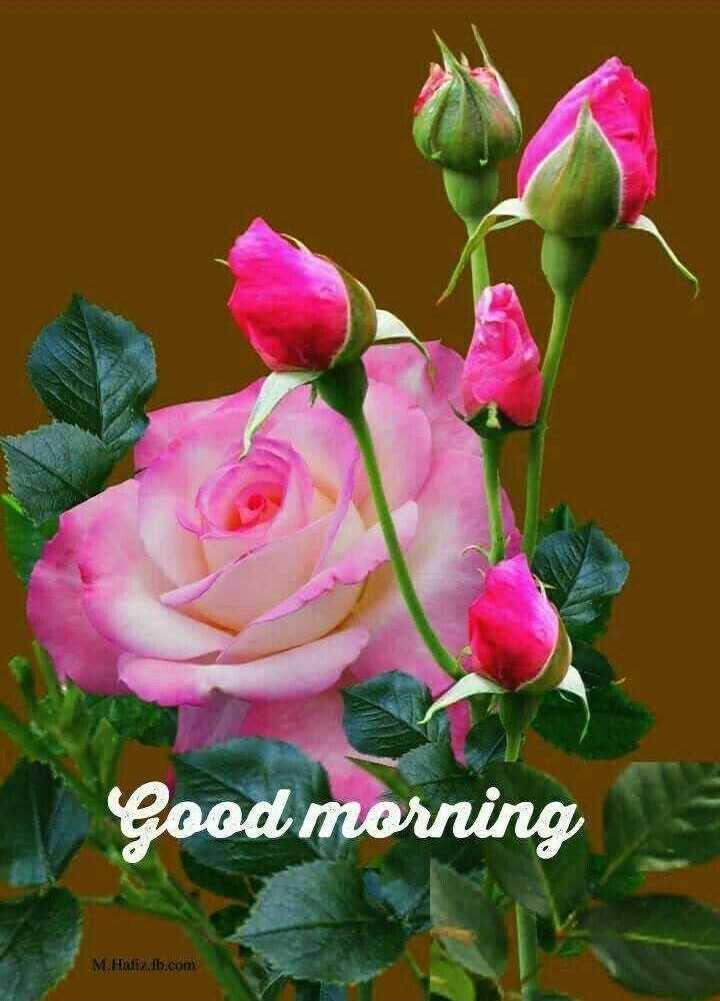 🤳whatsapp dp - Good morning M . Halimb . com - ShareChat