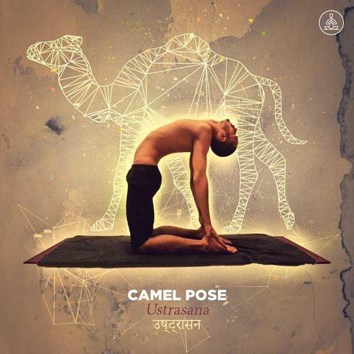 yoga - MW DANANWWWWWW CAMEL POSE Ustrasana उष्ट्रासन - ShareChat