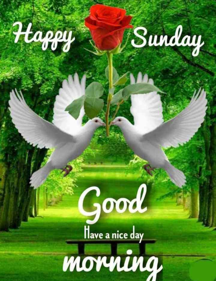 🌞 ഗുഡ് മോണിംഗ് - Happy Sunday Good Have a nice day morning - ShareChat