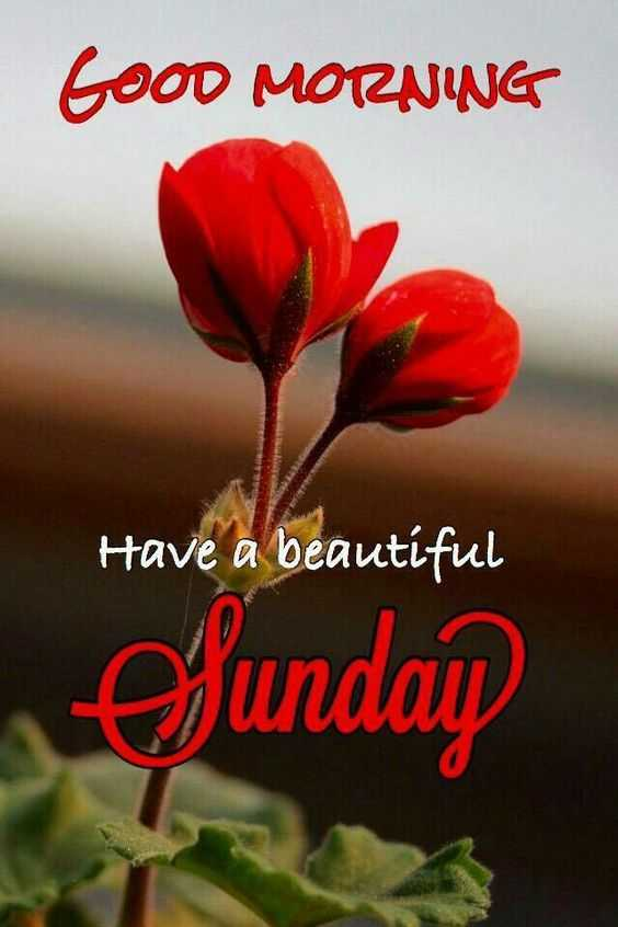 🌞 ഗുഡ് മോണിംഗ് - Good MORNING Have a beautiful Sunday - ShareChat